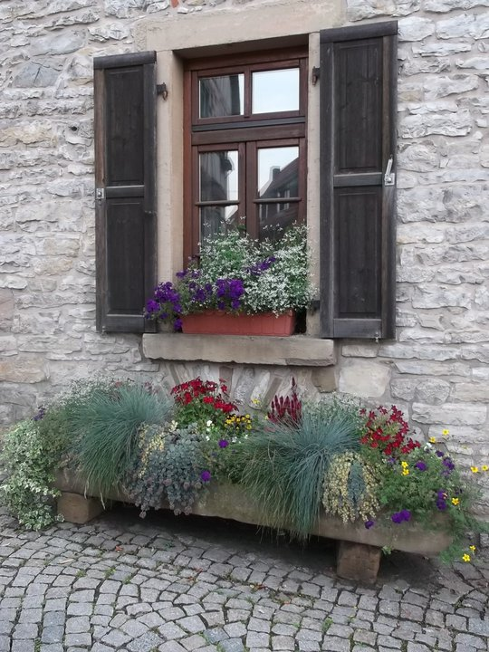 windows and flowers grey