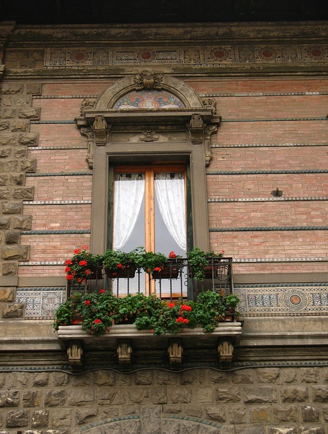 windows and flowers light brown