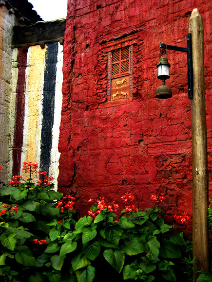 windows and flowers orange and red