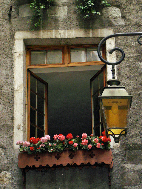 windows and flowers yellow